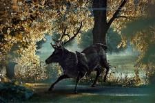 brame-cerf-cheval